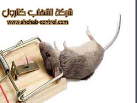 شركة مكافحة الفئران بأبها