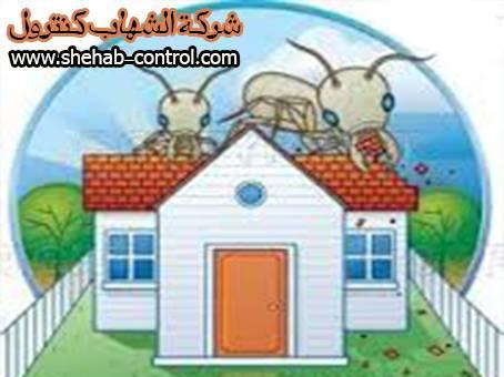 شركة مكافحة النمل الأبيض بجازان