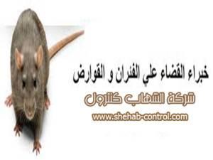 أرخص شركة مكافحة الفئران بالدمام