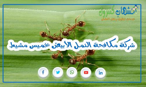 شركة مكافحة النمل الأبيض بخميس مشيط
