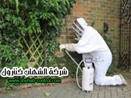 شركة مكافحة الحشرات بخميس مشيط