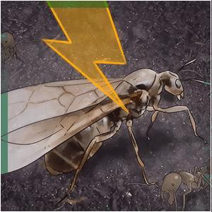 مكافحة حشرات الطائف