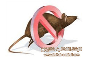 أرخص شركة مكافحة الفئران بمكة المكرمة