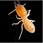 أرخص شركة مكافحة النمل الأبيض بخميس مشيط