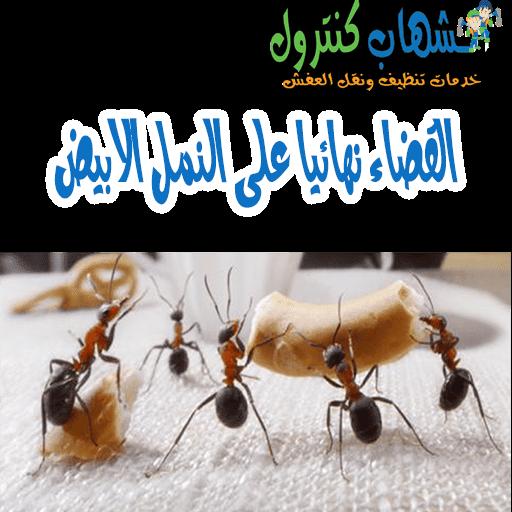 شركة مكافحة النمل الابيض جدة
