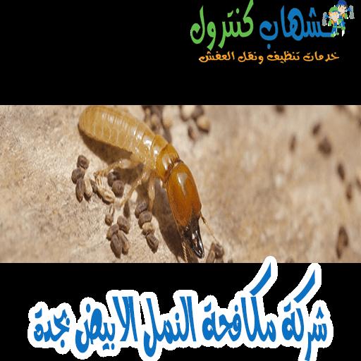 شركة مكافحة النمل الابيض في جدة