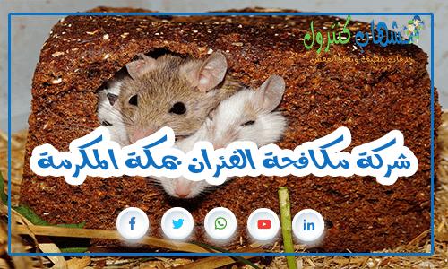 شركة مكافحة الفئران بمكة المكرمة