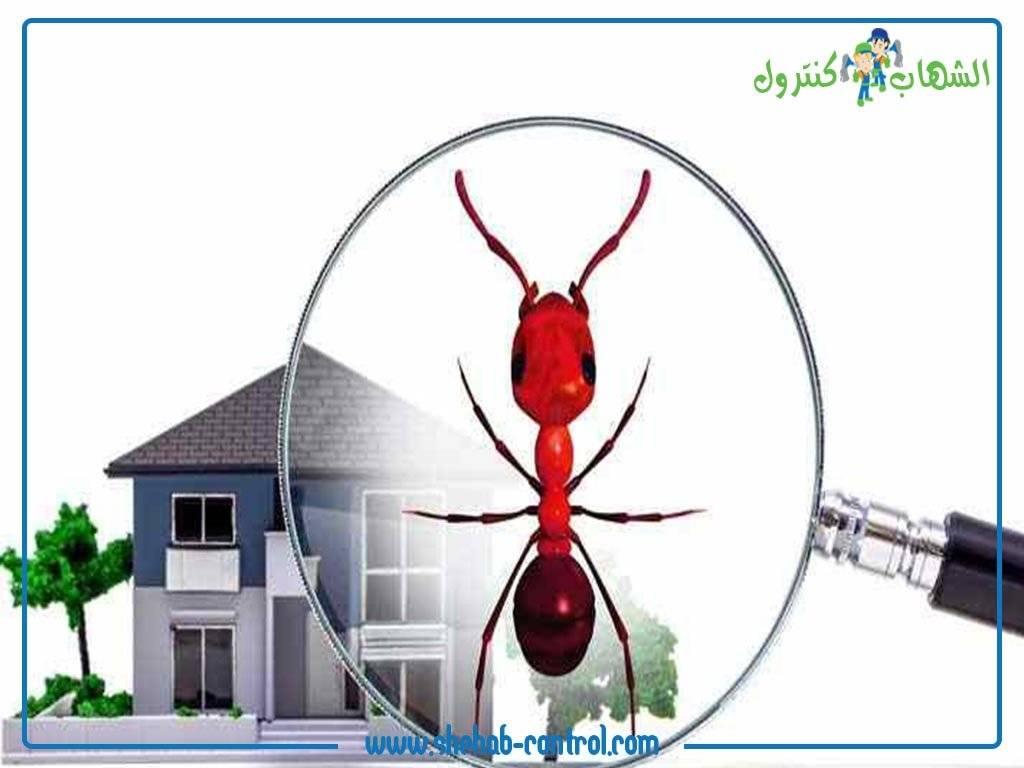 مكافحة حشرات المنزل الطائرة منها والزاحفة