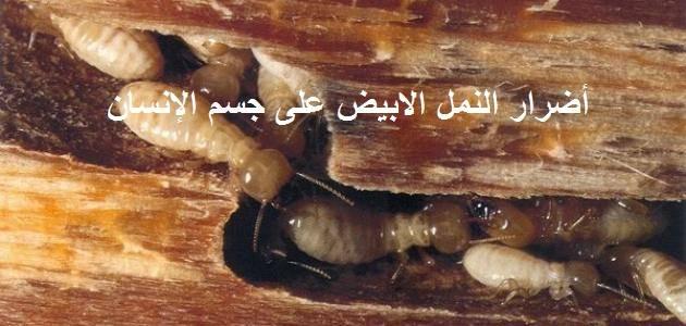 اضرار النمل الابيض على جسم الانسان