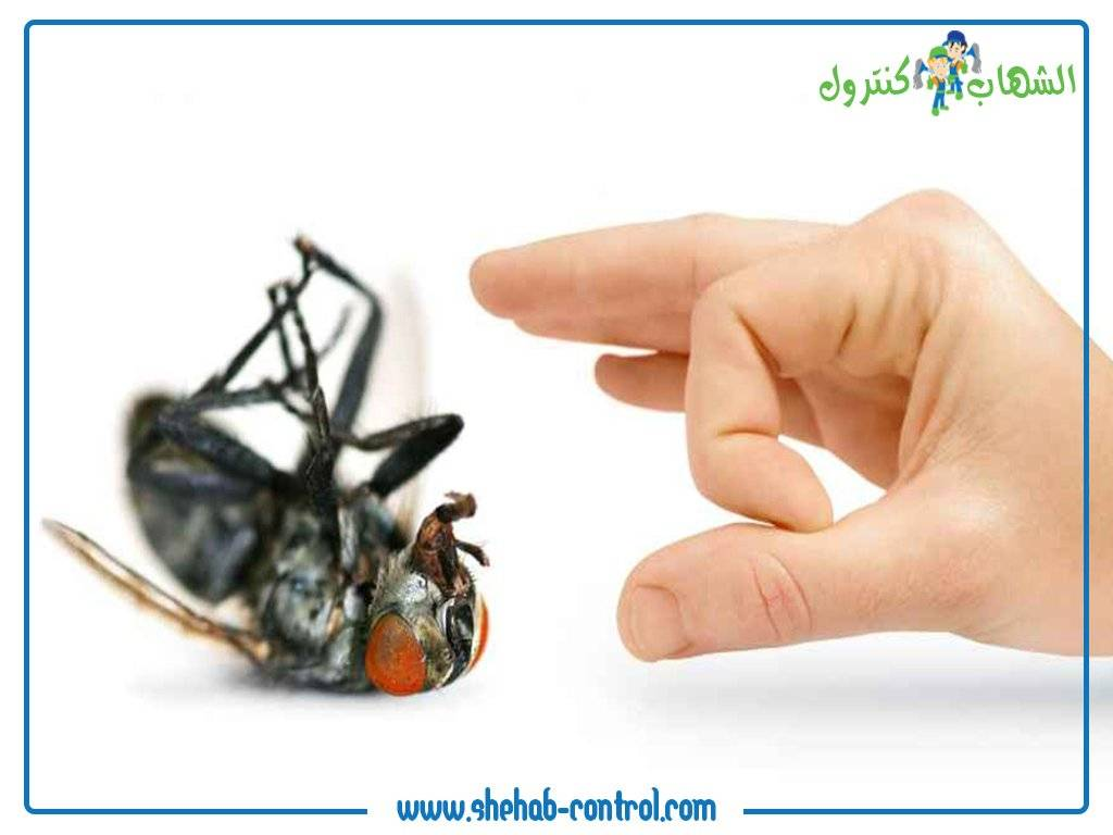 صورة ذبابة تم التخلص منها بواسطة عمال الشركة