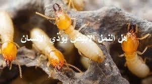 هل النمل الابيض يؤذي الانسان