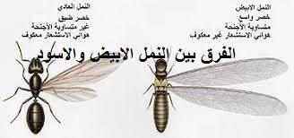 الفرق بين النمل الابيض والاسود