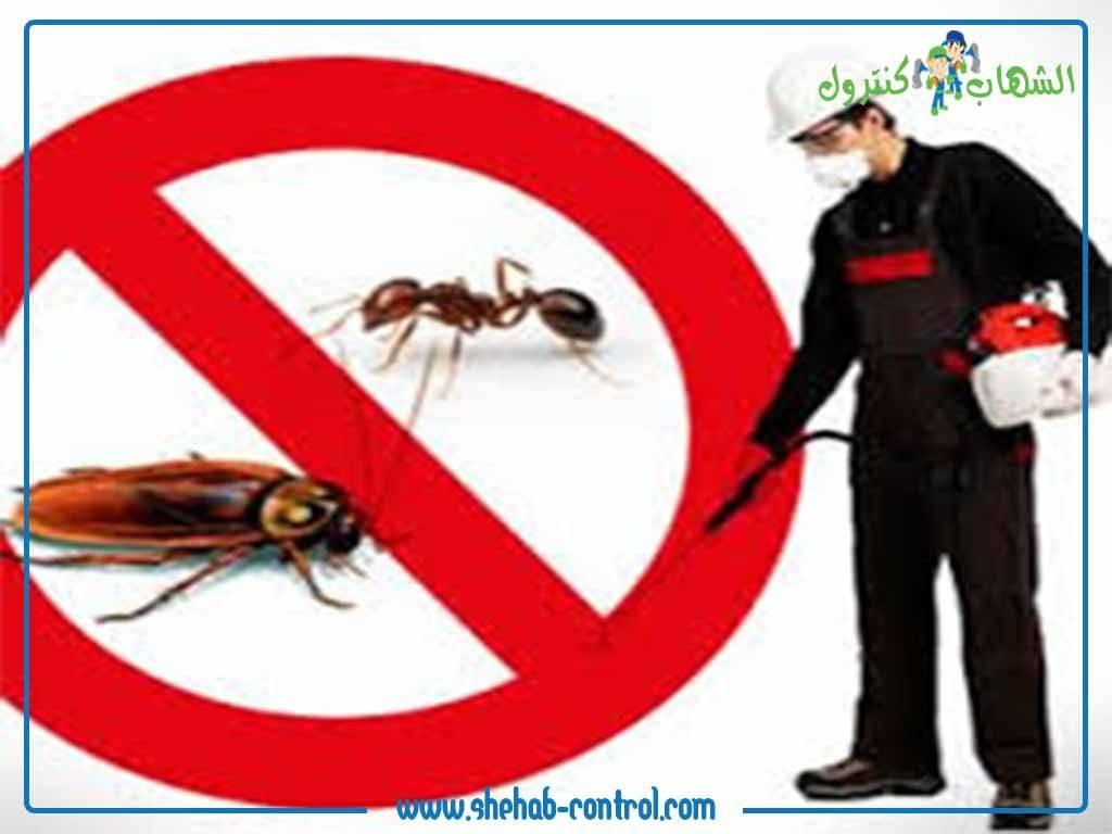 الحشرات الزاحفة