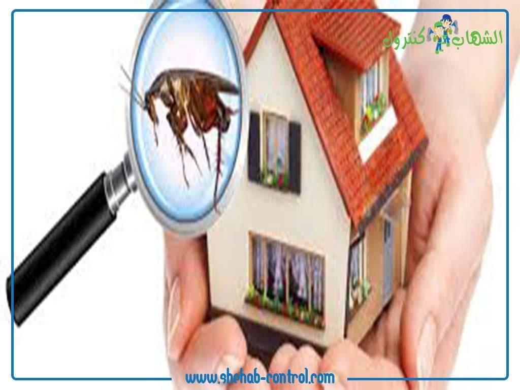 حشرات المنزل 2