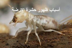 اسباب ظهور حشرة الارضة