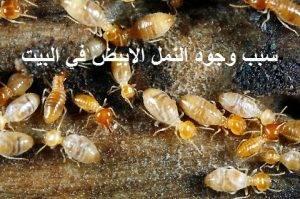 سبب وجود النمل الابيض في البيت
