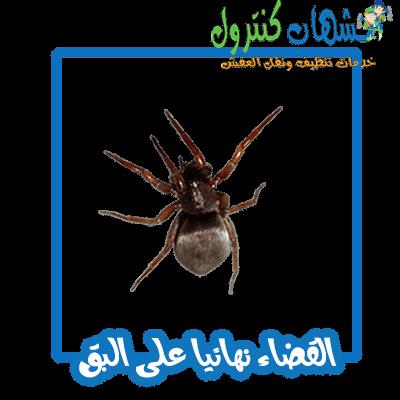 مكافحة حشرات جده