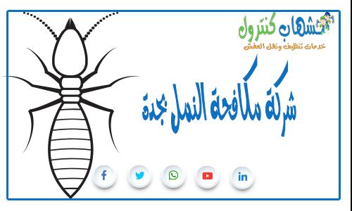 شركة مكافحة النمل بجدة