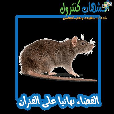 مكافحة الفئران جدة