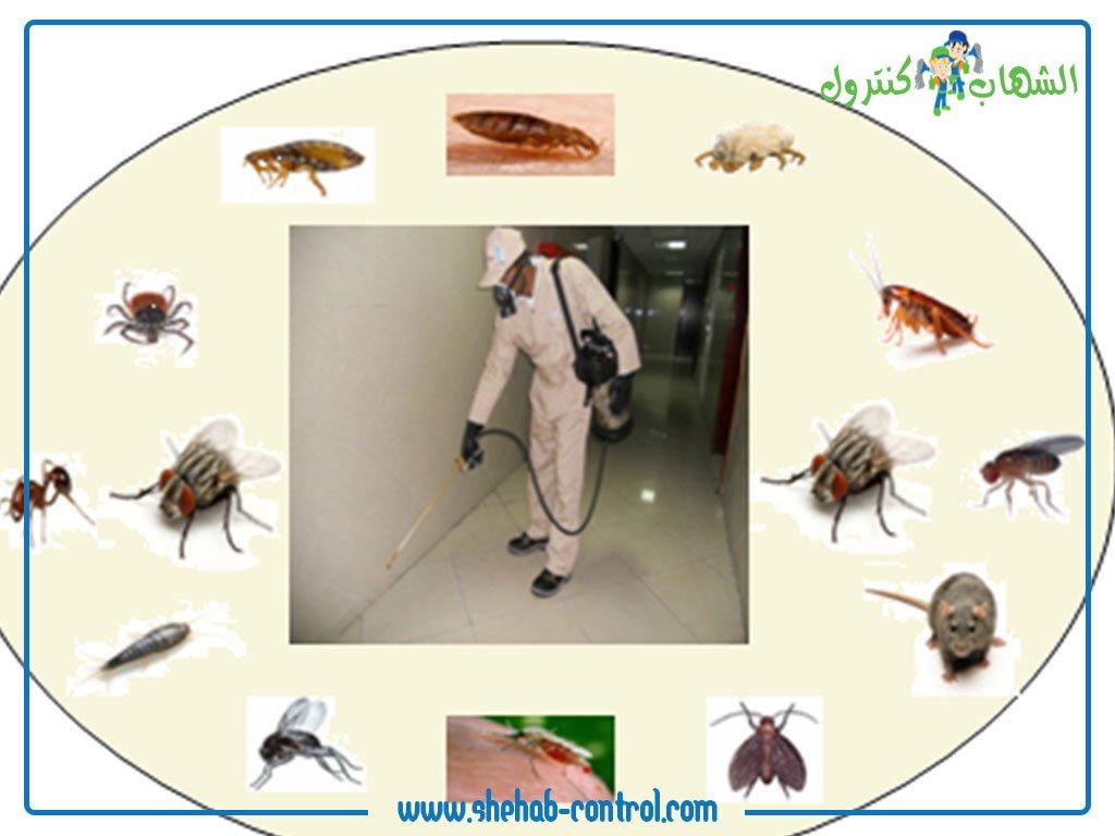 الحشرات والقوارض