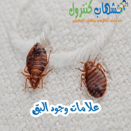 أضرار حشرة البق على الإنسان