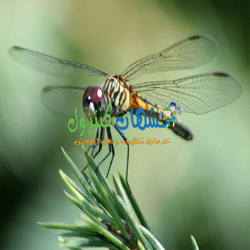 القضاء علي حشرة اليعسوب