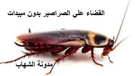 القضاء علي الصراصير