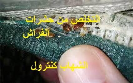 التخلص من حشرات الفراش
