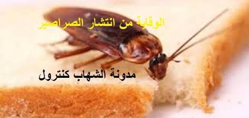 الصراصير