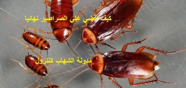 كيف اقضي علي الصراصير نهائيا بخطوات بسيطة