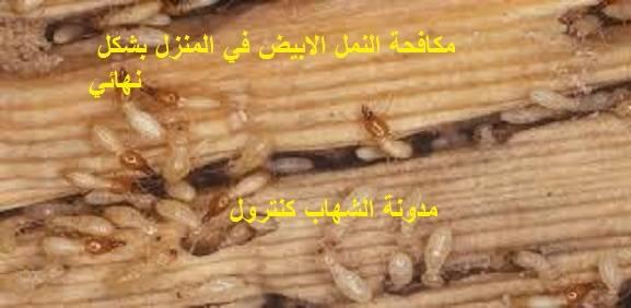 مكافحة النمل الابيض في المنزل بشكل نهائي