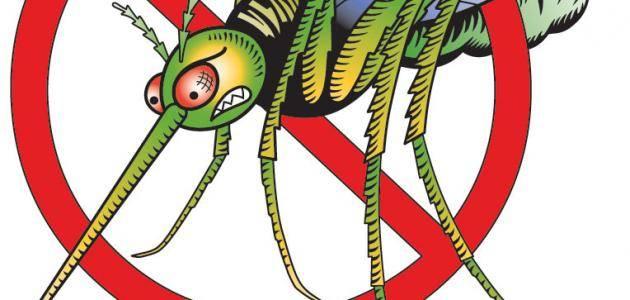 انواع البعوض